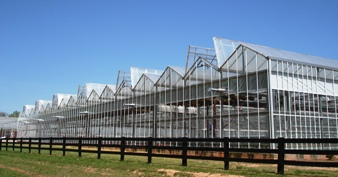 Venlo Greenhouse open roof
